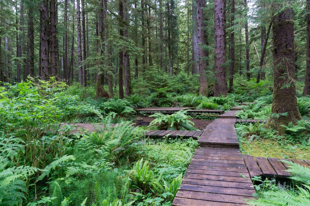 Eric Lake campground on the Cape Scott trail