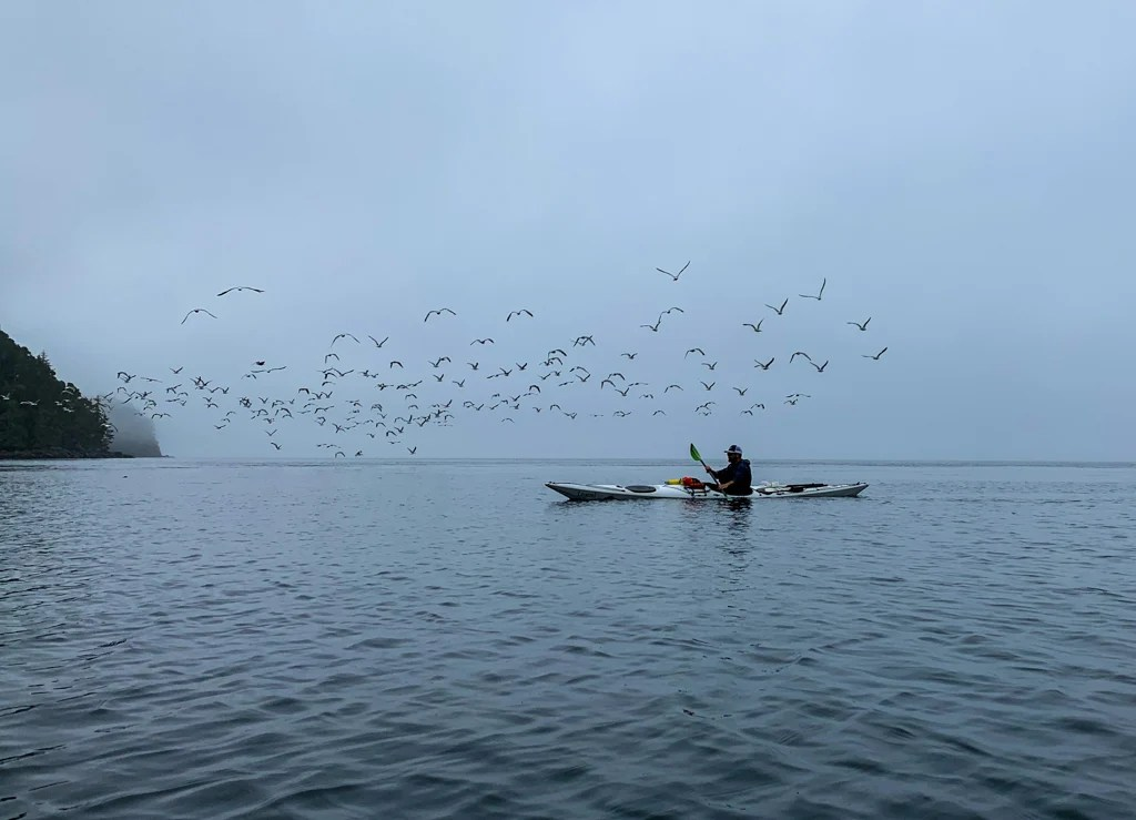 Foggy weather kayaking in the Johnstone Strait