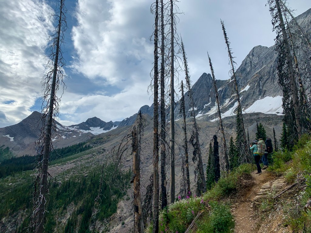 Descending through the burned forest from Floe Lake