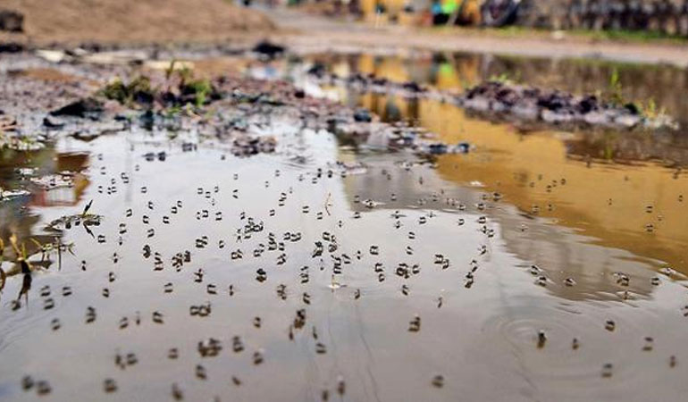 Water is Key to Mosquito Survival