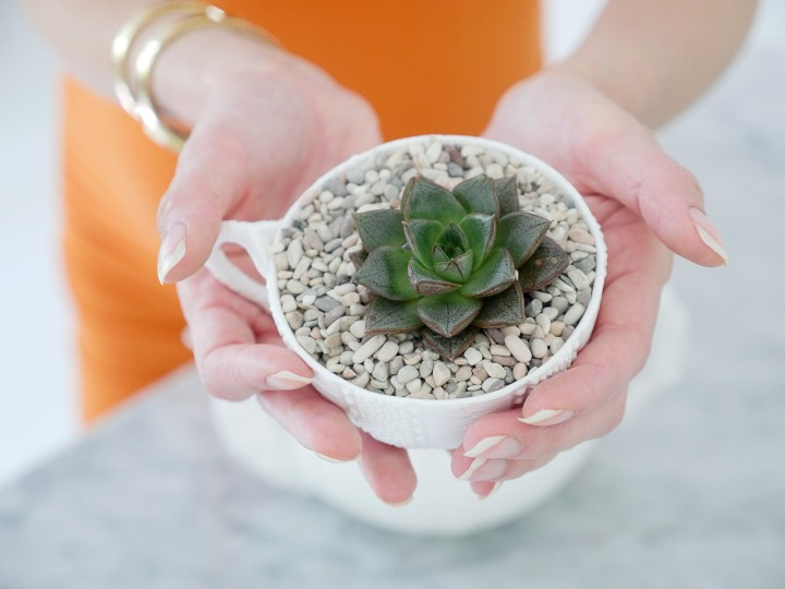 Eva Amurri Martino from the Happily Eva After blog displaying her DIY Teacup Planters with Mini Succulents and small pebbles, wearing a bodycon orange maternity dress and gold bracelet watch