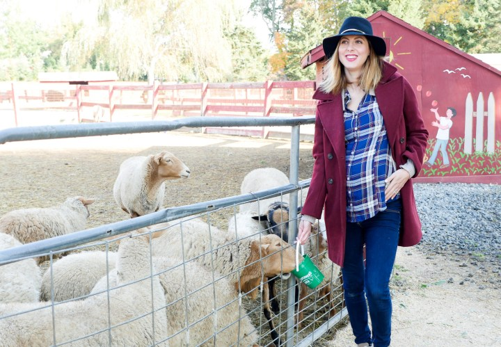 Eva Amurri Martino of lifestyle and motherhood blog Happily Eva After wearing dark denim maternity jeans, a plaid maternity top, oxblood wool peacoat, and a navy felt hat, feeding the sheep at Silverman's animal farm in Connecticut