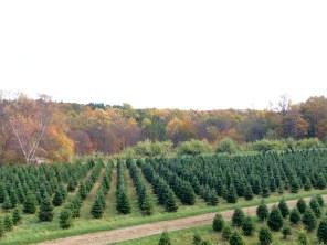 xmas-trees