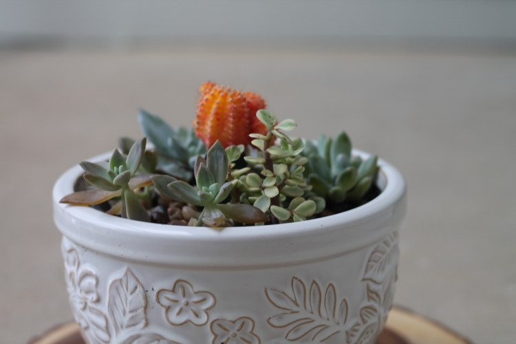 DIY Mini Succulent Garden | read more at happilythehicks.com
