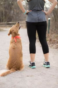 Picking a Training Program - Half Marathon Series | read more at happilythehicks.com