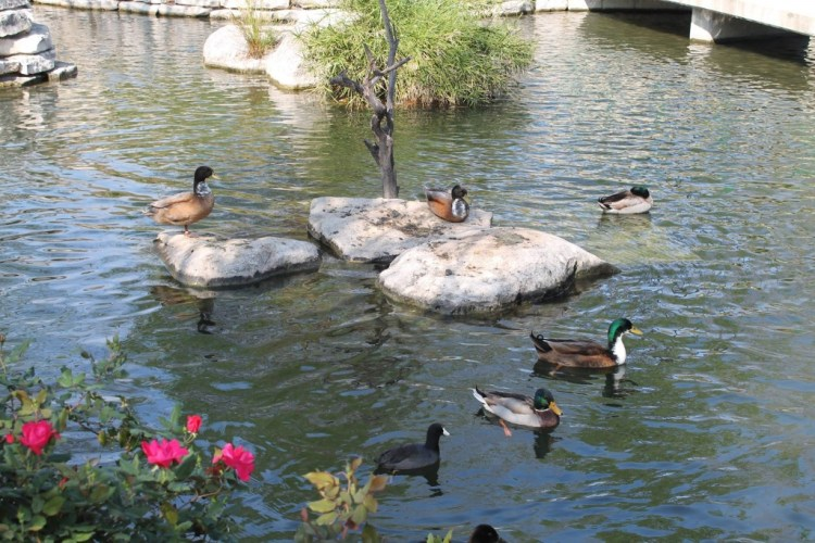 What to do on a trip to San Antonio, Texas | read more at happilythehicks.com