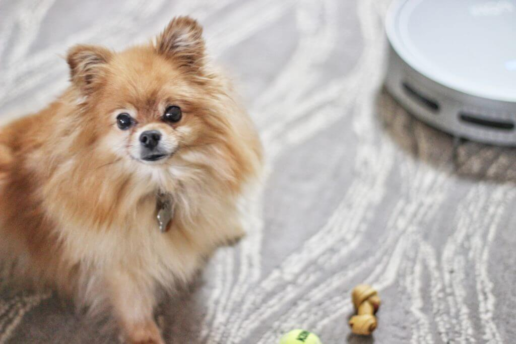 bObi Pet by bObsweep