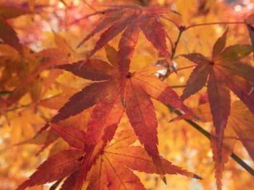 紅葉 色づき始めから見頃まで