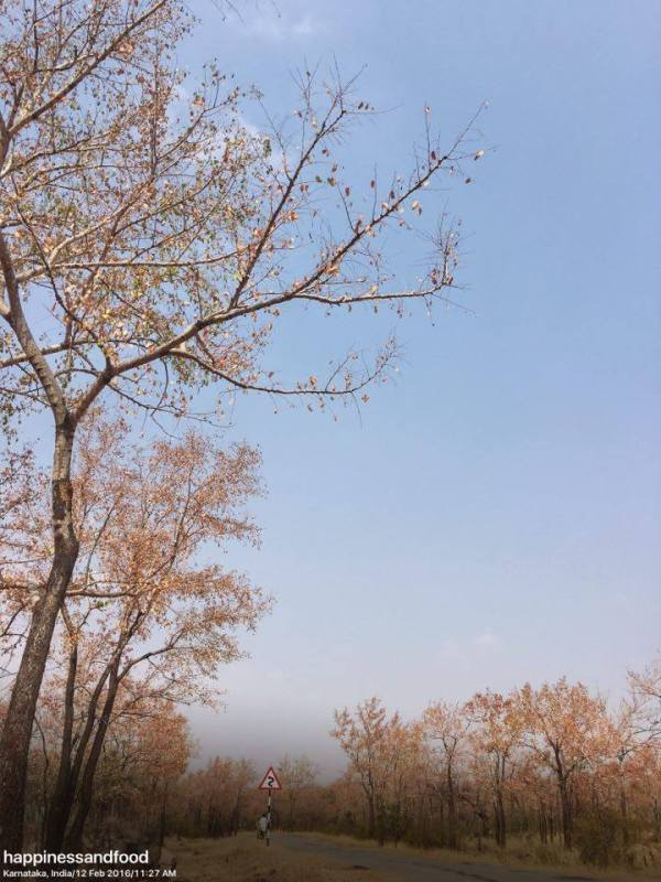 The beautiful trees with red leaves
