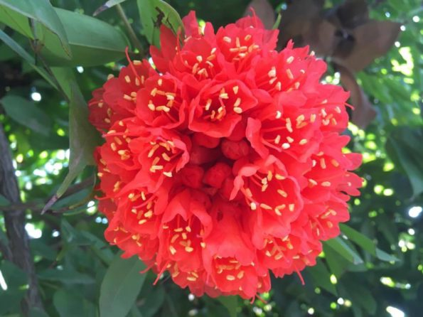 the red flower