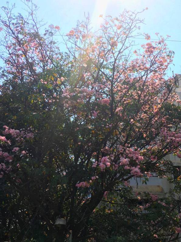 Blossoms - Thursday Tree Love