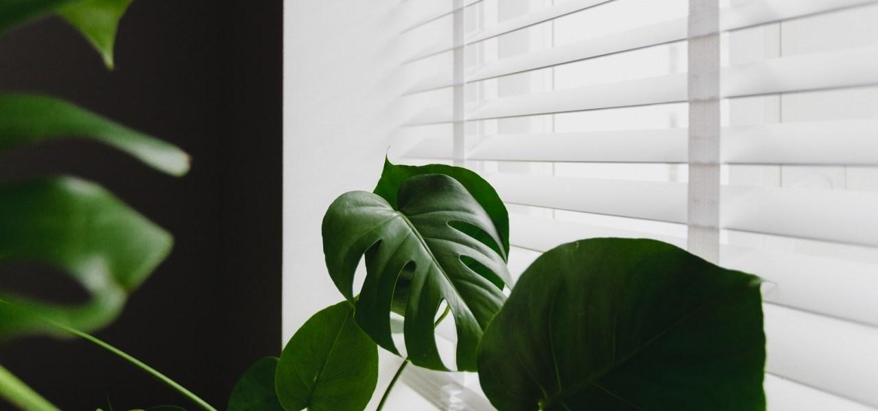 plante à côté d'une fenêtre
