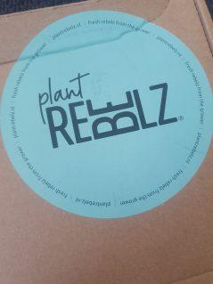 Plant Rebelz - Stekkie box