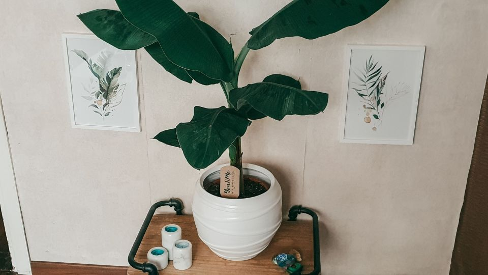 Waterbotanical posters