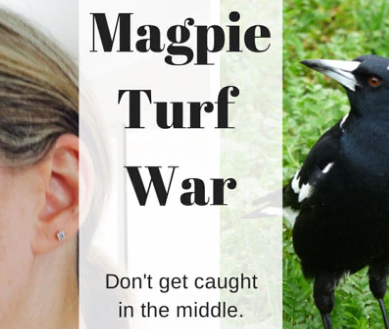WARNING:  Magpie Draws Blood!