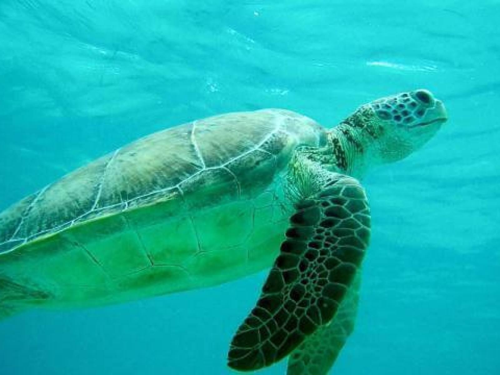 conservacion-marina-tortuga (1)
