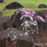 クカニロコの石