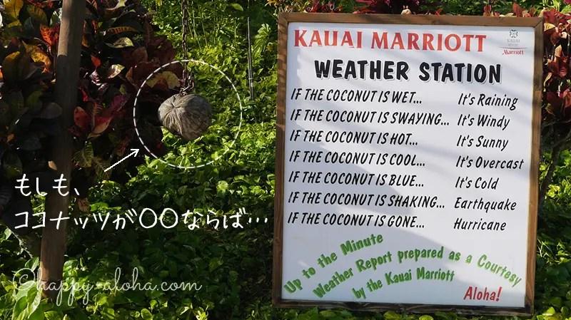 ココナッツ天気予報