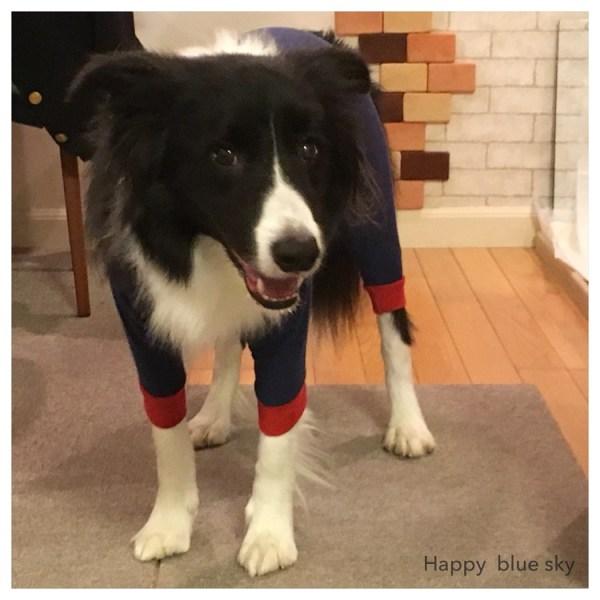 愛犬Jの犬服 その1 「アルファアイコンのおパジャマ」