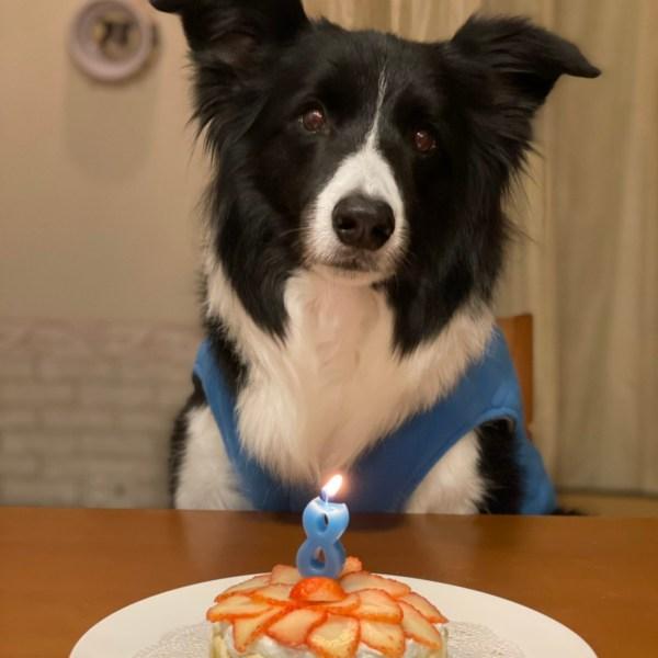 愛犬Jが8歳を迎えました♪