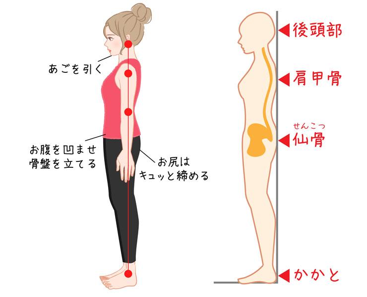※https://moteco-web.jp/diet/39824