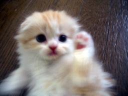 子猫のクリちゃん