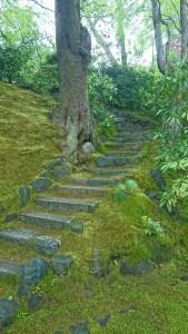 坂道の苔2