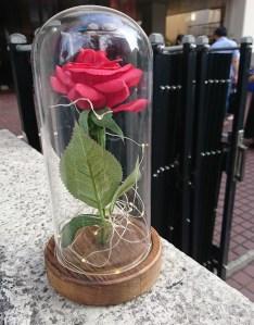 集合場所の薔薇