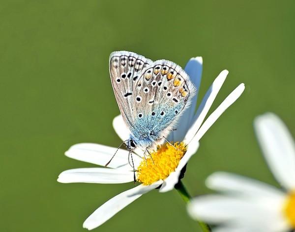 可憐な蝶々