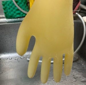 ゴム手袋に水を入れて膨らませた