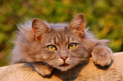 Pisica adoră să observe