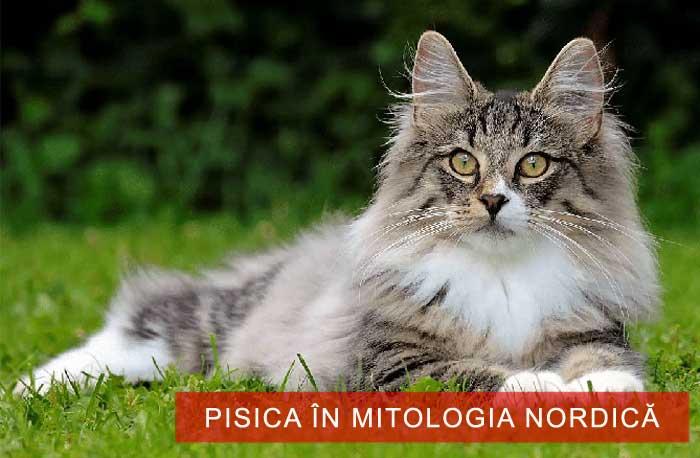 pisicile în mitologia nordică