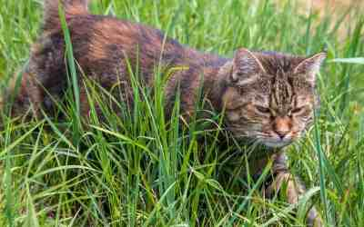 Überfällig: Kastrationspflicht für Katzen