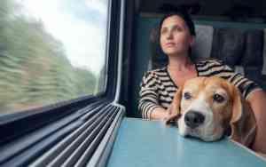 Urlaub mit Hund: Reisen mit der Bahn