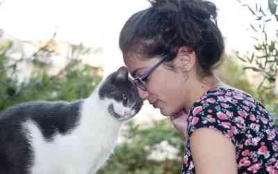 Wie Katzen ihre Liebe zeigen
