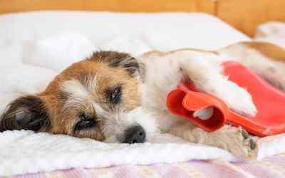 Was tun bei Durchfall beim Hund?