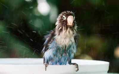 Ideale Vogelbadewanne für Ziervögel