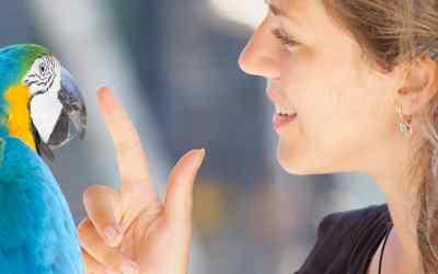 Was ist Tierkommunikation?