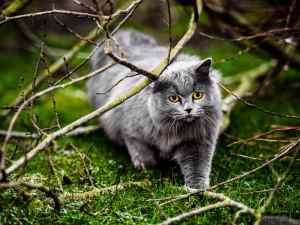 Tierfotografie: Bleibende Erinnerungen 1
