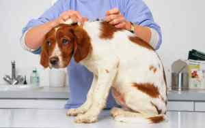 Schutzimpfungen für Hunde