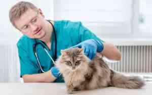 Schutzimpfungen für Katzen