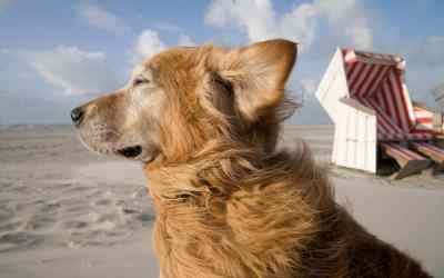 Reisezeit: Der perfekte Urlaub mit Hund