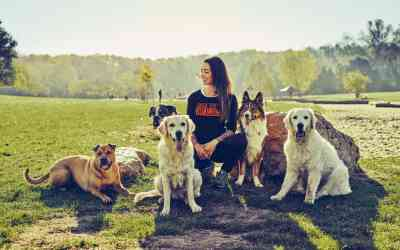 Bei Martin Rütter DOGS Köln – Teil 1