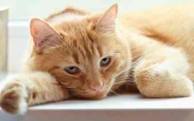 Epilepsie bei Katzen