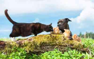 Ist artgerechte Tierhaltung möglich?