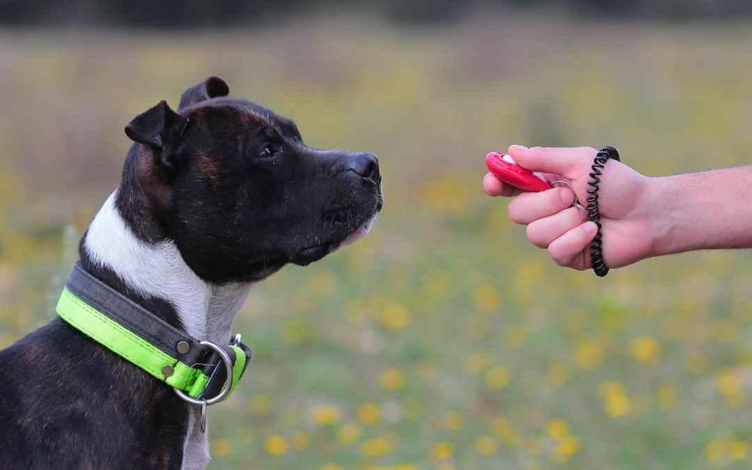 Clickertraining beim Hund