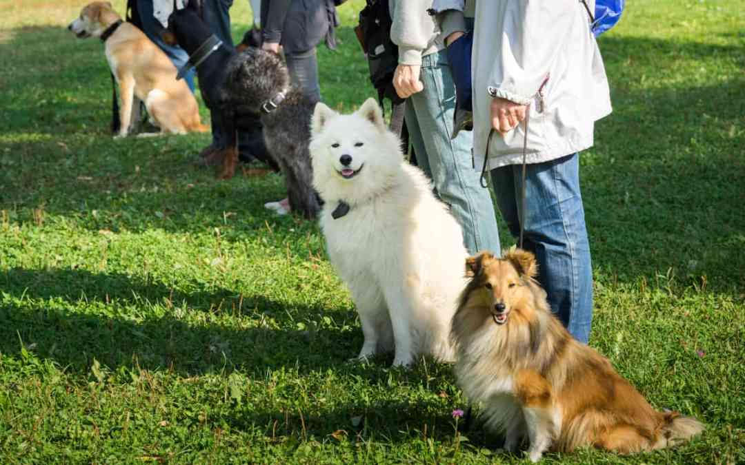 Merkmale einer guten Hundeschule