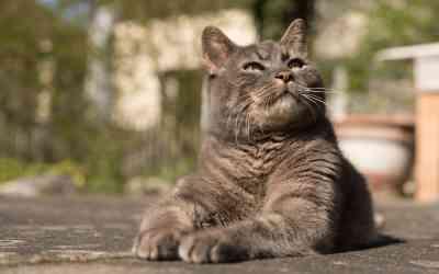 Checkliste: Bist du reif für eine Katze?