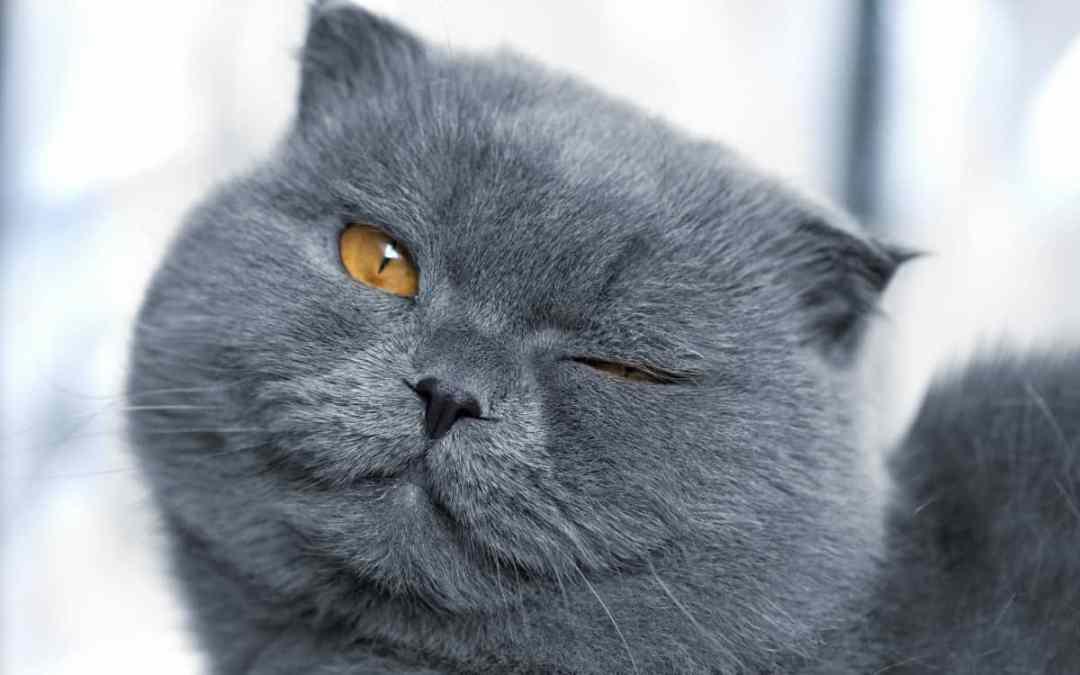 6 Tipps: Was Katzen uns lehren können