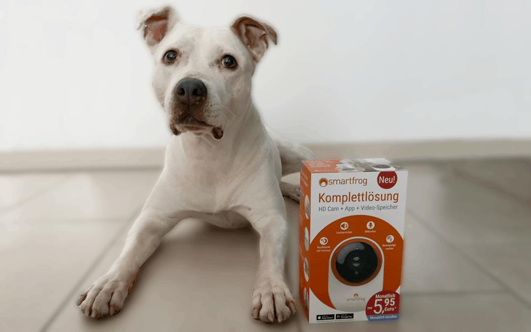 Die Hundekamera von Smartfrog: Meine Erfahrungen